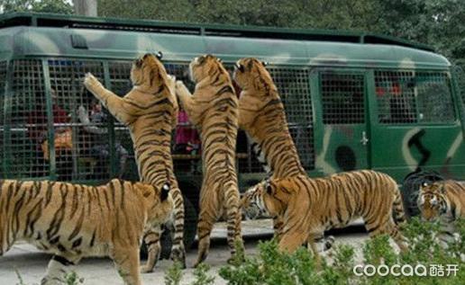 老虎张嘴简笔画