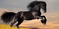 酷开发力,这匹OTT黑马很强势