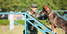《奇犬》断桥跳跃开练 姜潮另类特训方式惊众人